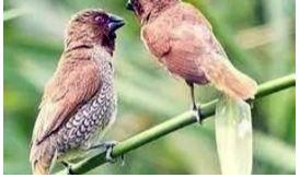 【关注】农民需要的驱鸟剂,你有吗?