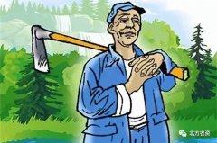种树有补贴!详解林业补贴标准及额度