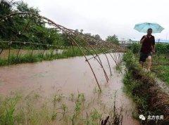 农作物遭遇暴雨后,如何进行田间管理