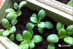 用有机肥种出优质好蔬菜,从此让你不再亏!