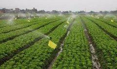 农药整体大幅上涨,还需保持冷静,认