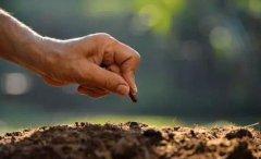 有机肥+无机肥+生物菌肥,该怎么搭配?你知道吗