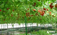 培育新型农业经营主体,国务院常务会