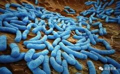 微生物在保护土壤健康中有哪些作用