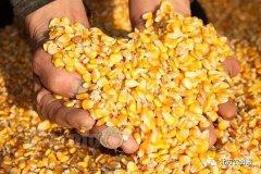 2018年,玉米还得涨!