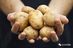 小小马铃薯必将在农业结构调整、助农