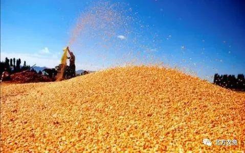 两万吨2014年陈玉米卖到9毛7/斤,会刺激新玉米掉