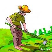厂家、经销商、种植户得其一,财源就