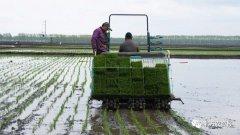 农业农村部发布水稻作物施肥指导意见