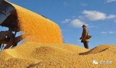 粮食生产咋稳定?农业提质咋实现?河南有所作