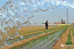 小麦进入产量形成关键期,注意做好这几项工作