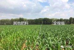 【全稼福最流行系列报道4】这里的玉米黝黑发亮
