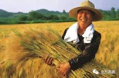 三农政策来袭,实惠多多,抓紧时间关注TA!