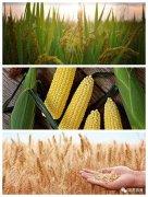 种子有了新政策,制种产业有了新保障?保费补贴政策了解一下