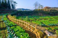 从供给侧改革中看农业发展的绿色机遇!