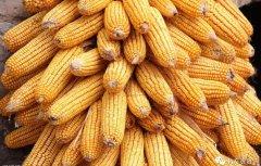2019年四大粮食作物的价格走势如何?