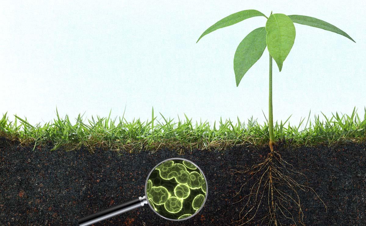 新型肥料迎来发展机遇期