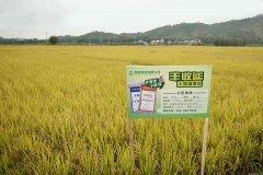 土壤改良先行者  鸿达兴业十年布局迎来