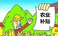2019年粮补取消!中央将实施三补一调!