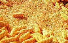 2019年玉米价格如何发展?什么时候会上涨