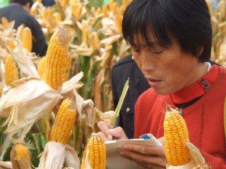 玉米刚涨就跌,玉米人的小心脏扑腾扑腾的!