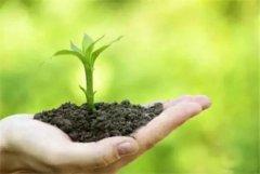 年复一年积累的化肥后效对环境有啥影响