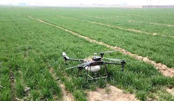 小麦扬花期如何喷洒农药?