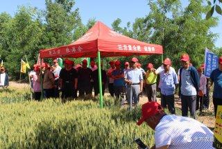 三方化工发布赢系列含菌小麦肥