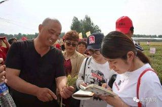 绿速达®河北馆陶小麦效果千人观摩会成功举办