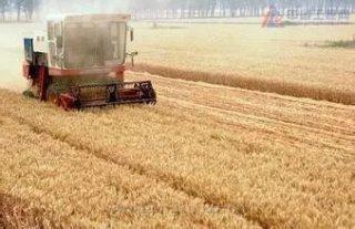 农业农村部部署夏粮生产后期灾害防范工作!