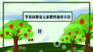 【画说三农】夏季苹果树怎样施用微量元素肥料?