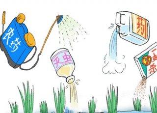夏季高温,给农作物打药千万注意方式方法!