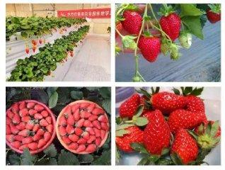 2019首届全国草莓农技峰会(济南站)