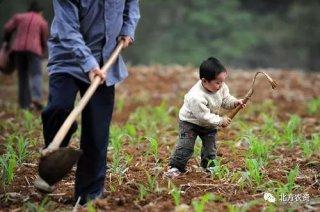 未来到底是谁在种地?