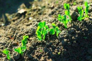 农业转型几个技术问题需突破