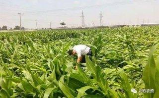 台风过境,农业生产该怎么办?