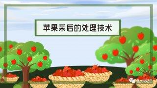 【画说三农】苹果采收后处理技术有哪些
