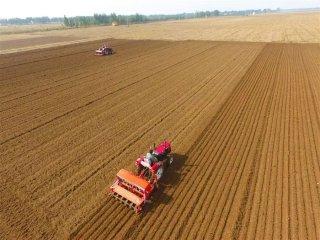 每亩小麦播种多少最适合?