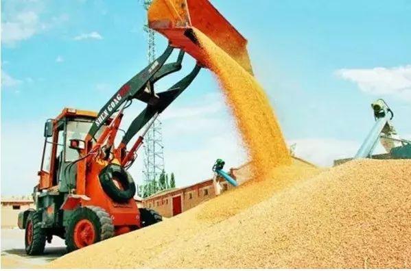 每斤1.12元!2020年小麦最低收购价格公布!