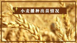 【画说三农】小麦种上已经好几天了,为啥迟迟不出苗?