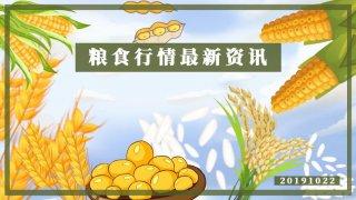 【画说三农】20191023 小麦玉米大豆最新行