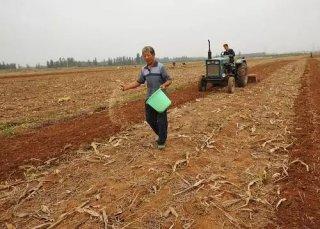 北方冬小麦播种基本完成,如何高效施肥?