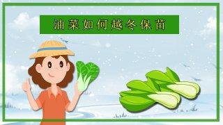 【画说三农】天气冷了,小油菜如何过冬呢?