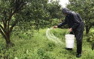 果树丰收要遵循科学施肥规律