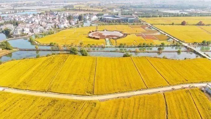 农业农村部:加强转基因生物监管,严防