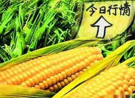 受疫情及供需影响,玉米行情将走向何方