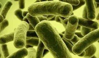 微生物肥料市场需求如何?它已迎来发展新机遇!