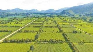 今年有8000万亩高标准农田建设任务需完成
