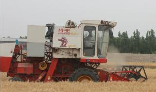 动能磷肥让盐碱地上的农民心里乐开了花