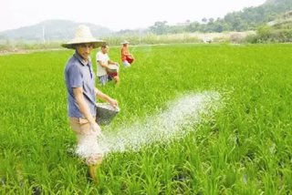 磷肥需要年年施吗?